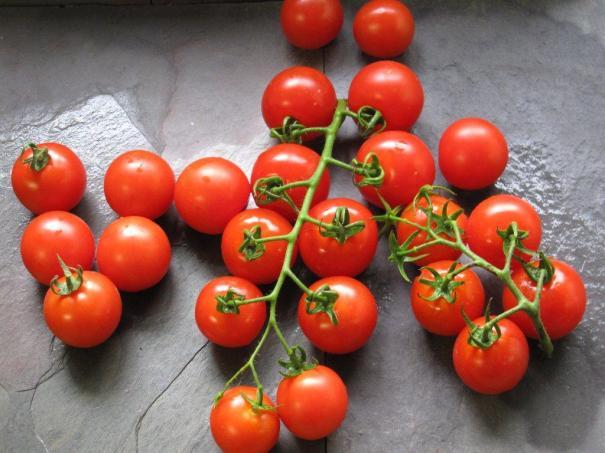 mountain-magic-tomato